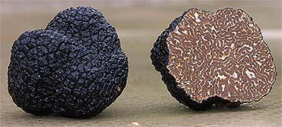 zwarte-truffel